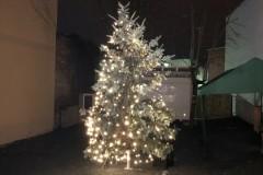Weihnachtsbaum bei Nacht